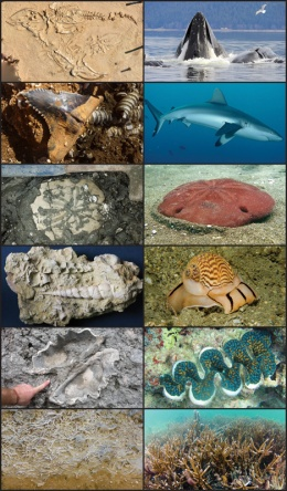 Fossils reveal patterns of extinction in marine species, past and present