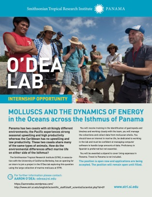 Mollusc opportunity in O'Dea lab